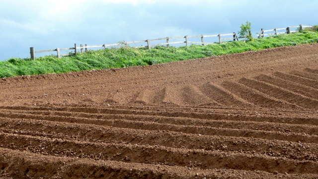 Solarizacija: Dezinfekcija zemljišta na prirodan način - © Pixabay
