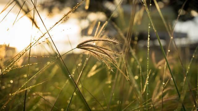Najnovije istraživanje: Što se više herbicidi koriste, to korov postaje otporniji - © Pixabay