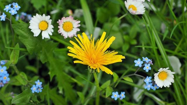 Korov nam pomaže da upoznamo zemljište - © Pixabay