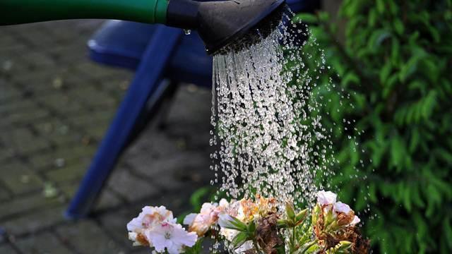 Kada je najbolje vreme za zalivanje biljaka tokom leta - © Pixabay