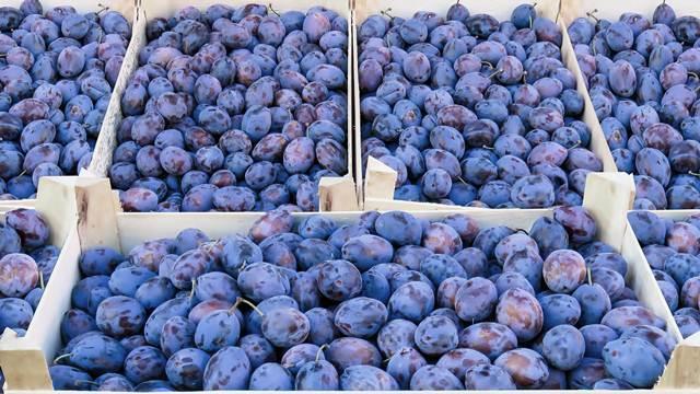 Kako opština Blace uspeva da se bavi voćarstvom - ©Agromedia