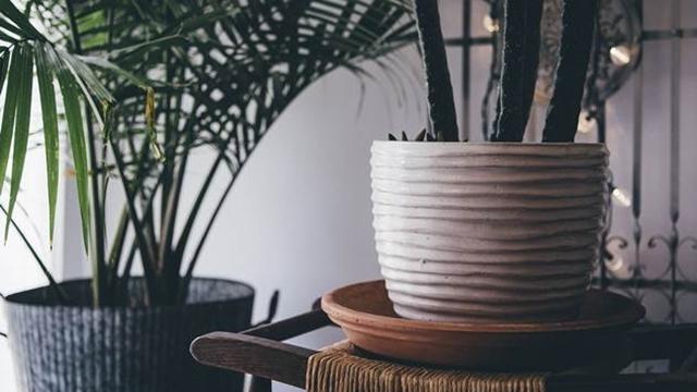 Kako da ubijete svoje biljke? - © Pixabay