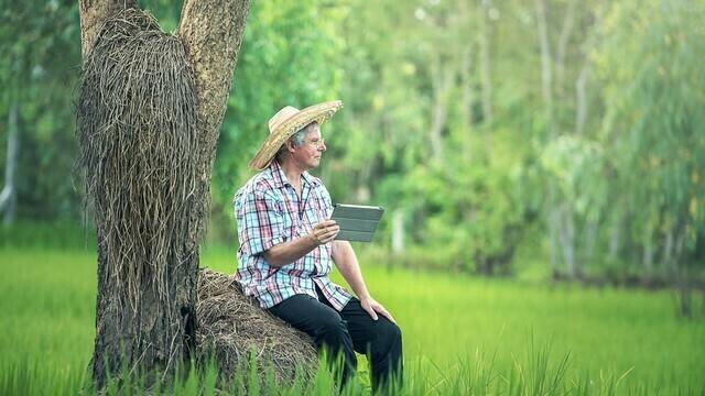 Razvoj veštačke inteligencije u Srbiji dotakao i poljoprivredu - © Pixabay