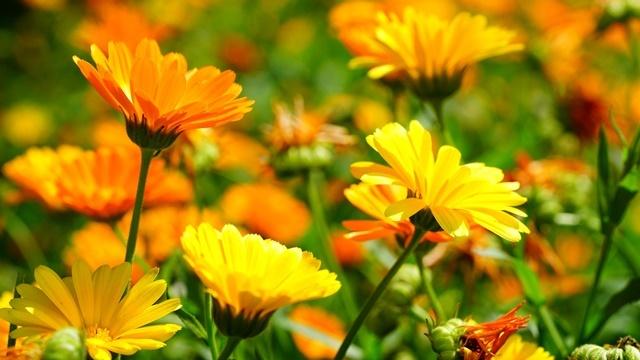 Novo otkriće: Biljke mogu da komuniciraju između sebe - © Pixabay