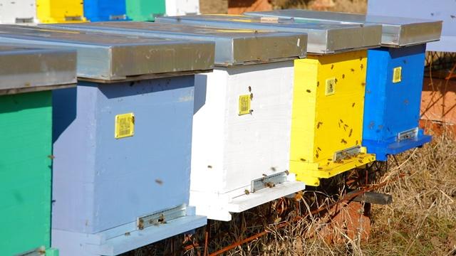 Pčelarstvo u avgustu: Ne propustite ovo da uradite, skupo će vas koštati- © Agromedia