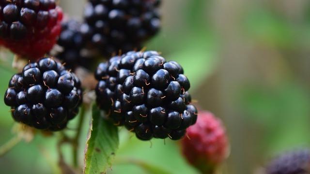 Primamljivo ukusna ograda: Kako da napravite živicu od voća - © Pixabay