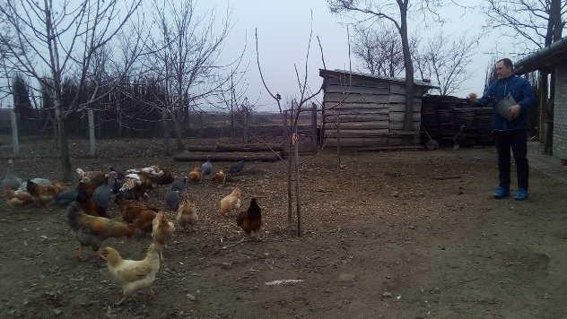 Goran hrani živinu na salašu © Foto: Ljiljana Pavlović