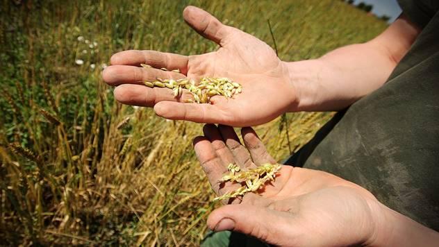 Ilustracija: Mladi u poljoprivredi - © Pixabay