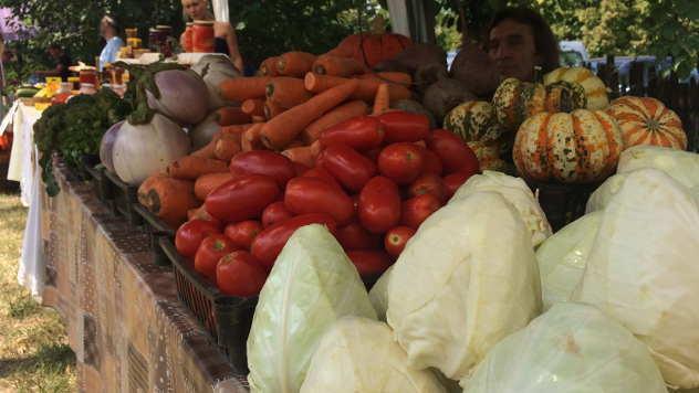 Organsko povrće porodice Vozar © Foto: Miha Ambrož