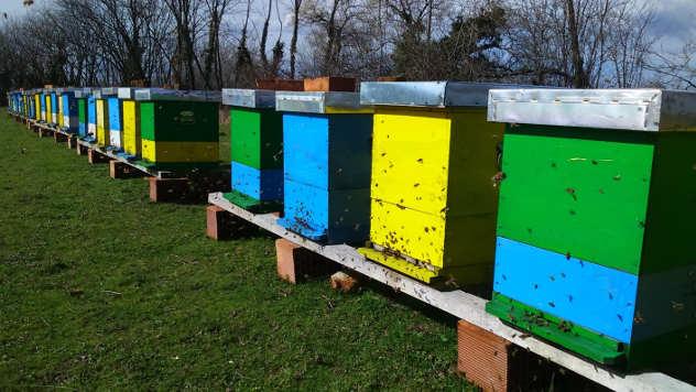 Pčelinjak porodice Miladinović - © Foto: Milan Miladinović