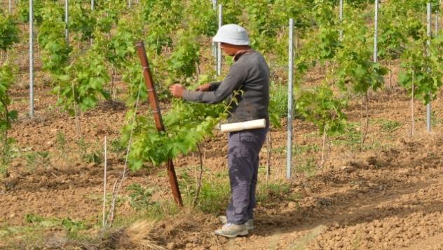 Radnik u polju- ©Pixabay
