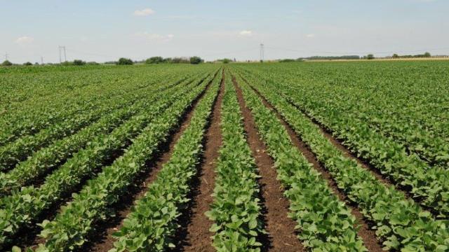 Zaštita kukuruza, soje i suncokreta od korova posle setve, a pre nicanja © Galenika-Fitofarmacija