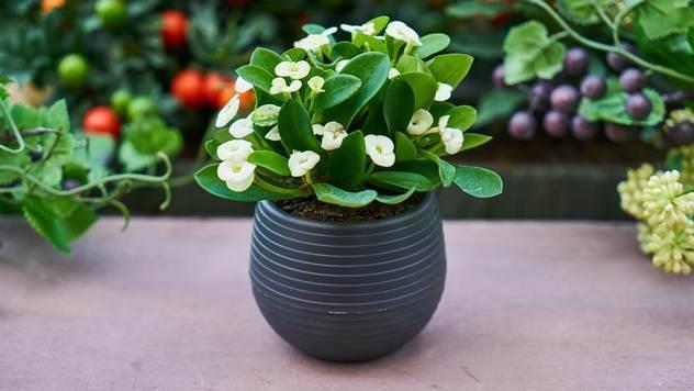 Cveće u saksiji - © Pixabay