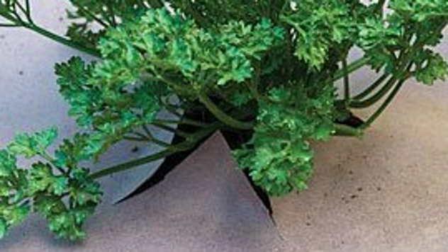 Biljka zaštićena kartonom - © Foto:www.containergardenclub.com