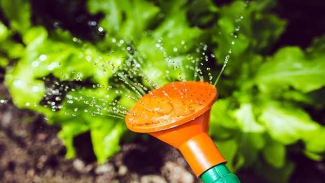 Kako i koliko često treba zalivati povrće - © Pixabay