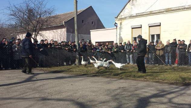 31. Gusanijada u Mokrinu - © Foto: Danijela Jankov