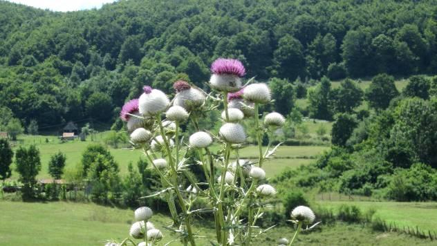 Korov nam pomaže da upoznamo zemljište - © Agromedia