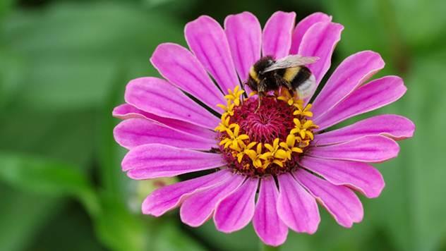 Samoniklo cveće: Cvetna bašta bez puno muke - © Pixabay