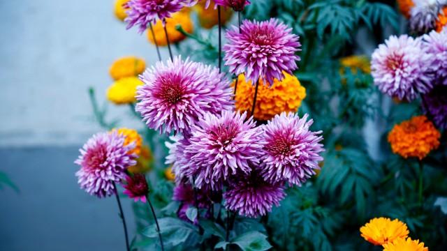 Saveti za početnike: Radite ovo redovno i cveće će duže da vam cveta - © Pexels