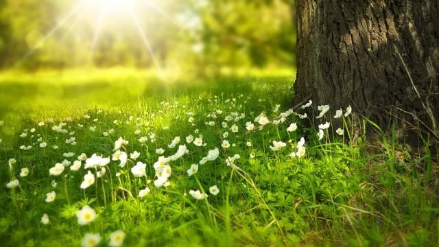 Divlji travnjak: Šareni biljni tepih koji ne mora da se kosi - © Pixabay
