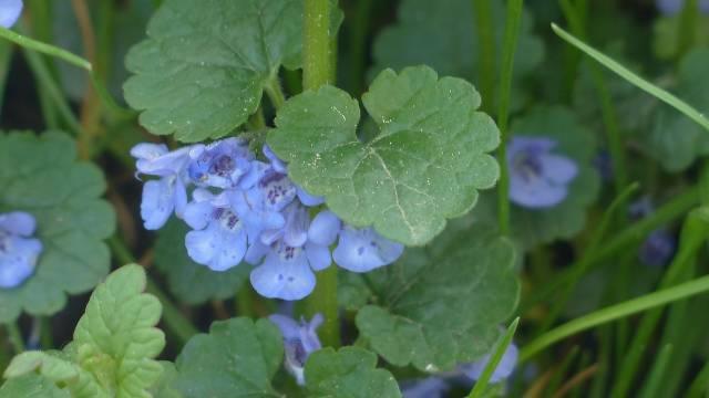Dobričica: Biljka koja jača organizam, brani od prehlade i čini život boljim- © Pixabay