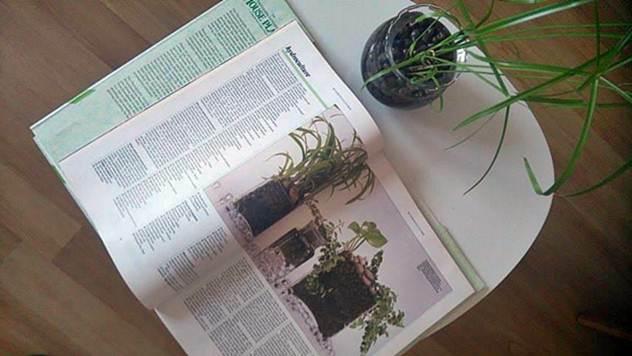Hidrokultura - isplativo gajenje povrća - © Agromedia