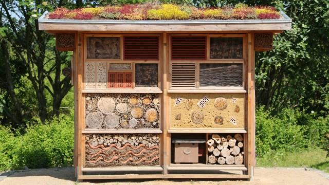 Hotel za insekte: Zašto je sve popularniji kod povrtara širom sveta - © Pixabay
