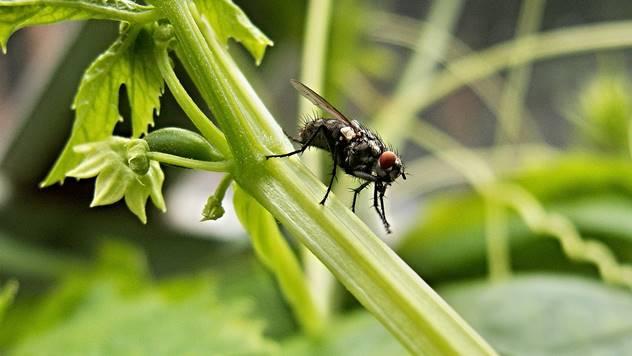 7 insekata koji su veoma korisni posetioci u vašoj bašti - © Pixabay