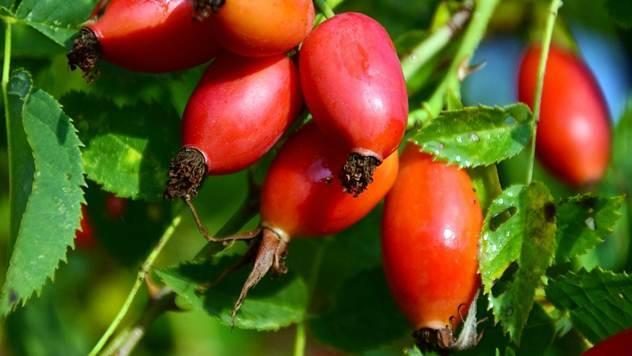 Sakupljanje šumskih plodova može biti unosan biznis - © Pixabay