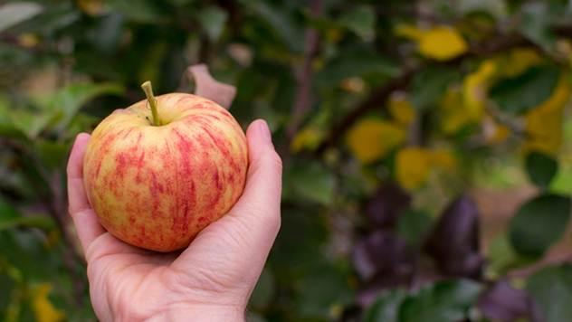 Kako da izbegnete najčešće greške koje pravimo pri sadnji voća - © Pixabay