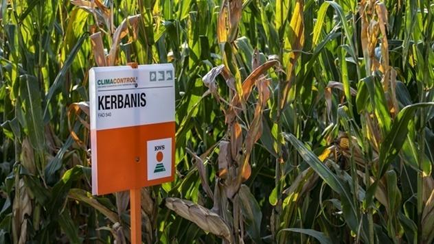 Clima Control 3 hibrid kukuruza - © Agromedia