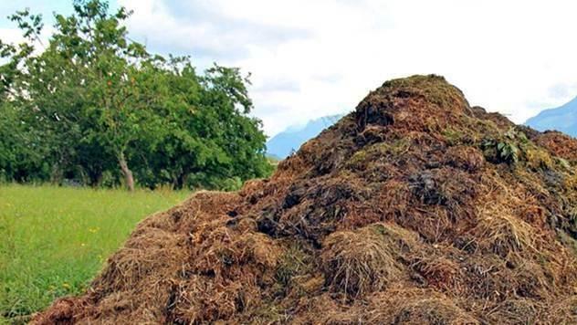 Kompost © Agromedia