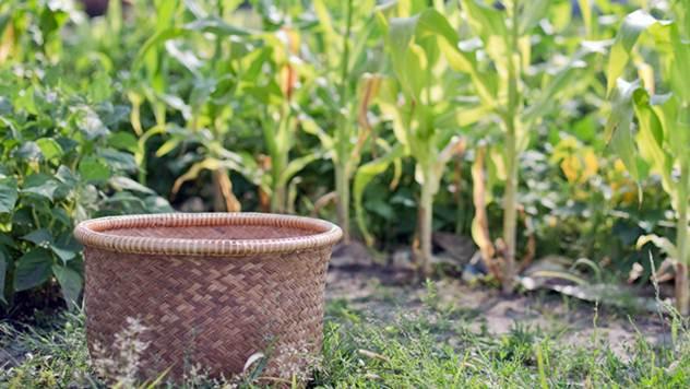 Podnesite zahtev na vreme za podsticaj u biljnoj proizvodnji - © Pixabay