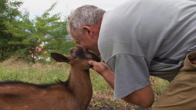 Koza i čovek @agromedia