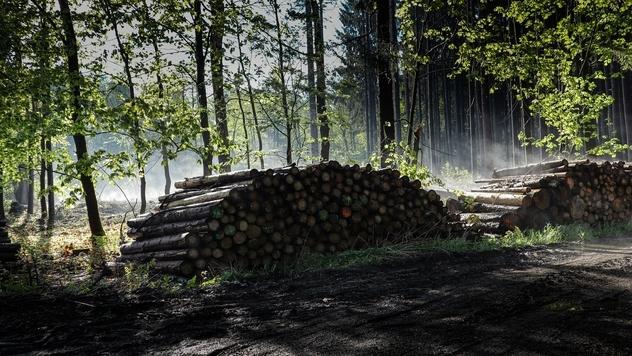 krečenje šuma- ©Pixabay