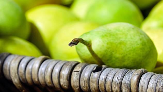 Viljamovka je stara sorta kruške poreklom iz Velike Britanije koja je još uvek popularna na našim prostorima - © Pixabay
