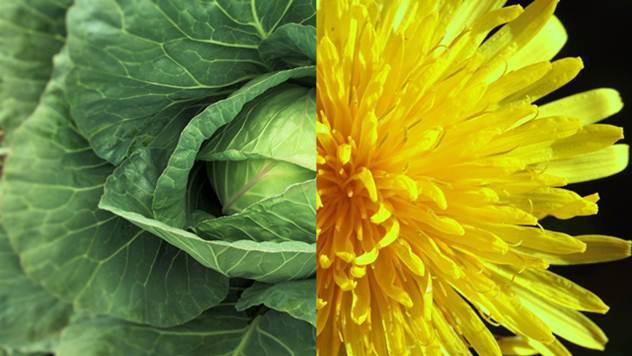 Od ovih biljaka možete napraviti prirodne preparate za zaštitu biljaka u organskoj proizvodnji - © Agromedia
