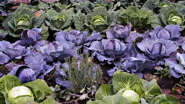 Dozvoljeni preparati za zaštitu bilja u organskoj proizvodnji - © Pixabay