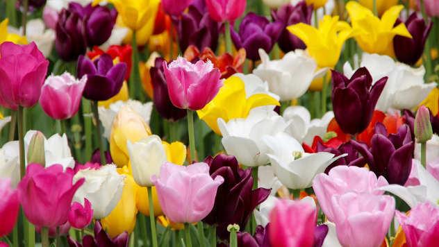 5 biljaka koje možete da sadite u oktobru - © Pixabay