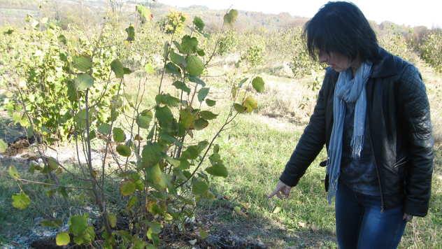 Violeta Petrović Luković iz PSSS Kragujevac objašnjava kako se vrši rezidba leske - © Foto: Biljana Nenković