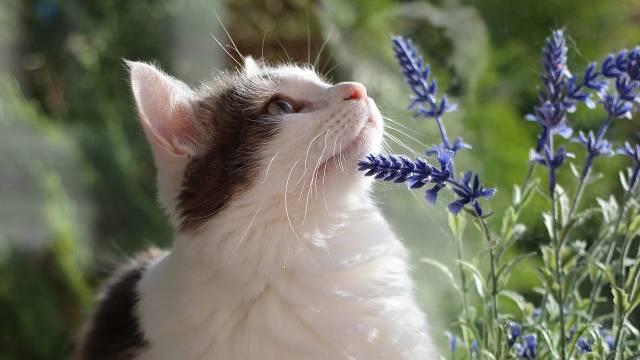 Imate mačku i volite cveće? Ove biljke možete slobodno da gajite u kući - © Pixabay