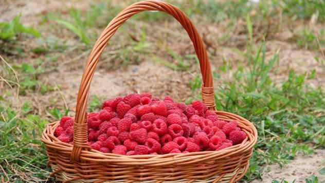 Od vremena berbe zavisi kvalitet plodova berbe - © Pixabay
