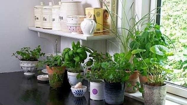 Mini-baštica u domu