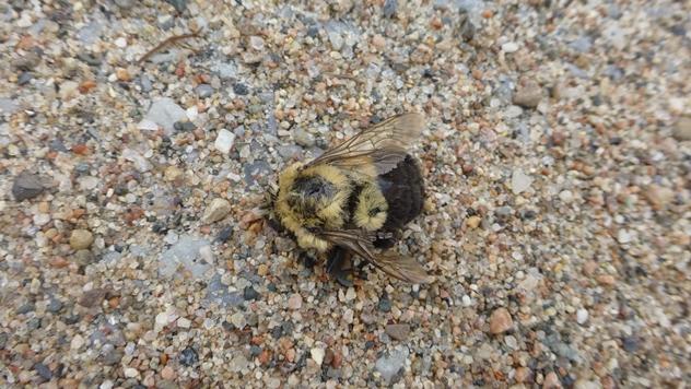 Uginule pčele - © Pixabay