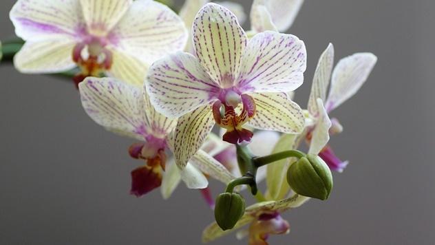 Orhideja © Pixabay