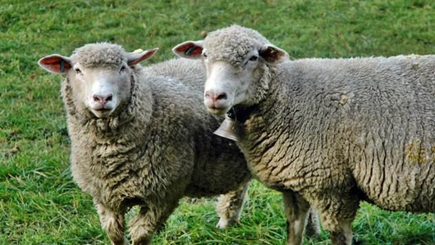 Ko sve može da konkuriše za podsticaje u stočarstvu - © Pixabay