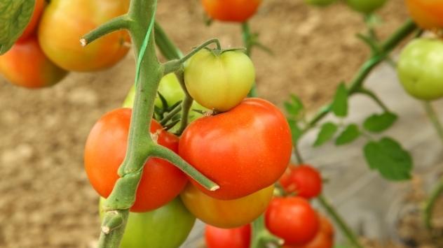Nisu problem teški uslovi za rad, već izuzetno niske cene povrća - © Pixabay