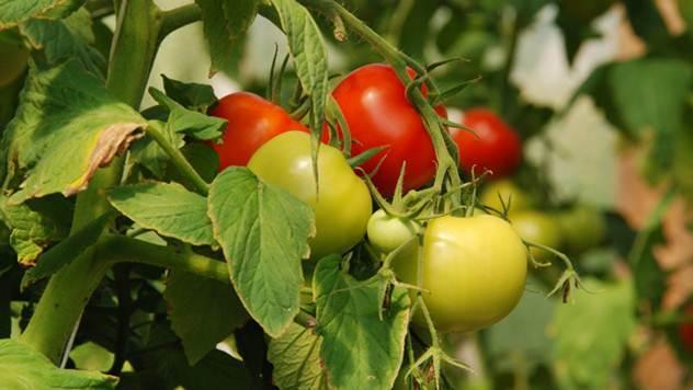 Koje cveće i povrće treba saditi zajedno - © Pixabay