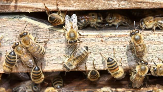 Pčelari iz Valjeva - © Pixabay