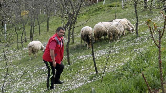 Na planinskim pašnjacima sve je manje stada - © Foto: Željko Dulanović